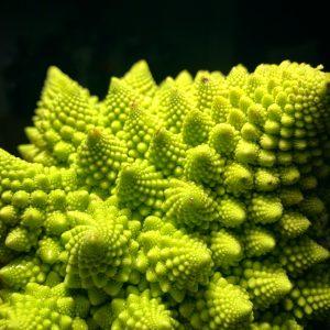 Romanesco broccoli (Brassica oleracea)  - one of many plants containing sulforaphane